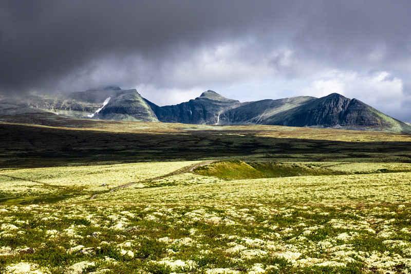 bergen met geel mos_opt